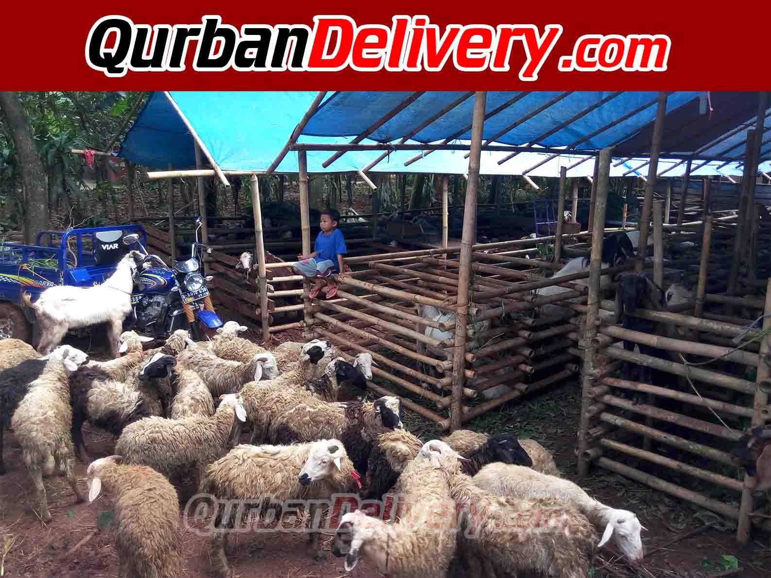 Harga Kambing Qurban Di Jakarta Prediksi 2020-Qurban Delivery